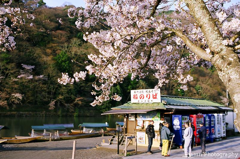 Under the Cherry Tree.<br /> In Arashiyama, Kyoto.<br /> Note Film Shot: Nikon F80 + Nikkor 35 f/2 + Fujicolor Reala ACE 100