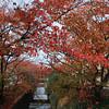 Closer to the Sakura in Colour Change.