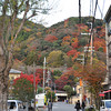 Autumnal Arashiyama Early in the Morning.