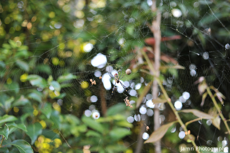 Into the Web.