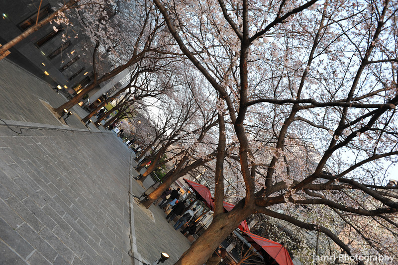 Under the Canopy.<br /> At Shirakawa, Gion, Kyoto.