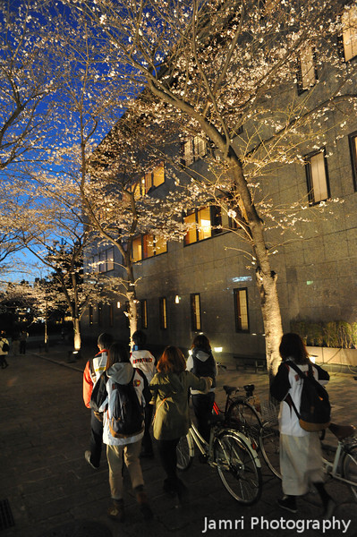 Walking their bikes under the Sakura.<br /> BTW I've been away for a while... I'm back now 8).