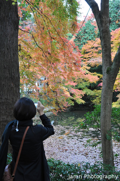Capturing the autumn colour.