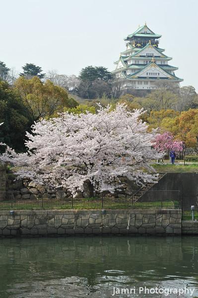 River, Sakuras, and the Castle.<br /> Osaka Castle.