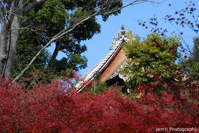 Through the Foliage.<br /> At Komyo-ji (a Buddhist Temple) in Nagaokakyo.