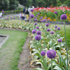 Purple Flowers.<br /> At the Kyoto Botanical Gardens.<br /> Note: Circular Polarising Filter Used
