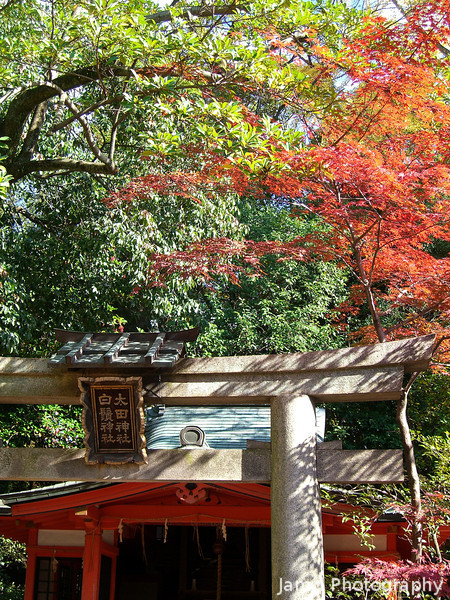 Little Shrine and Maple.<br /> In the grounds of Yasaka-jinja.