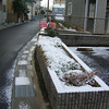 The Flower Bed After the Snow.