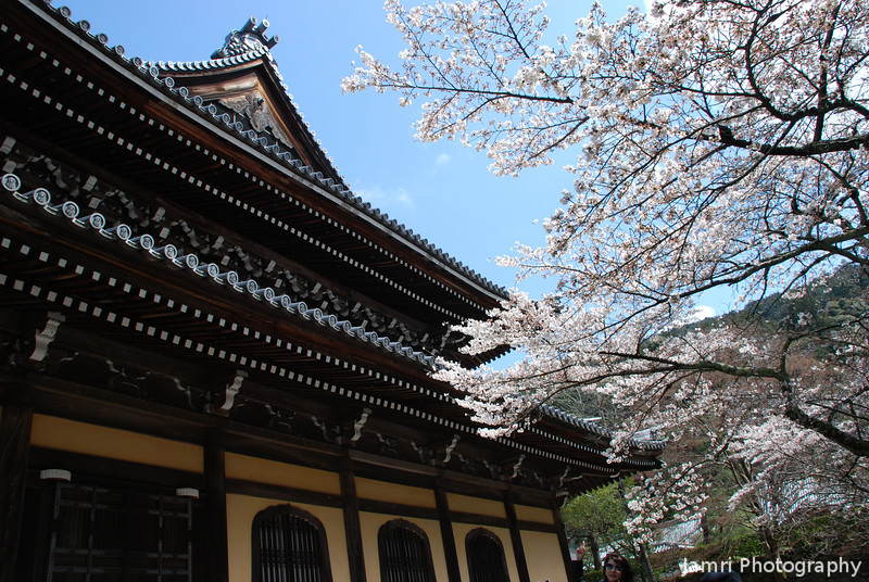 Sakura and Temple Building.<br /> At Nanzenji (a Buddhist Temple) in Keage, Kyoto.