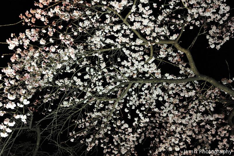 "Hanami Hanabi!<br /> ""Hanami"" means Sakura viewing. ""Hanabi"" means fireworks."