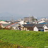 The East Side.<br /> A view towards the east side of Nagaokakyo.