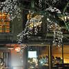 Evening Dining by the Sakuras.