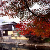 The View Through the Maple Leaves.<br /> At Arashiyama, Kyoto.<br /> Note Film Shot: Nikon F80 + Nikkor 35 f/2 + Fujichrome Velvia