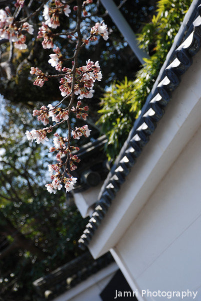 Sakura and Temple Wall.<br /> In Keage, Kyoto.