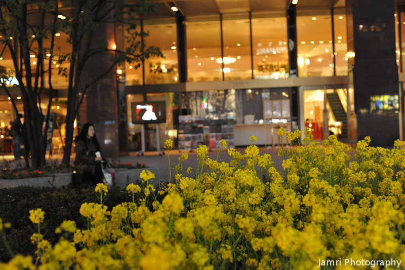 Flowers in the City.