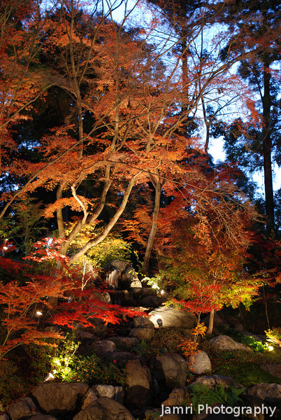 The tree by the little waterfall.<br /> At Nagaoka Tenmangu Shrine, in Nagaokakyo.