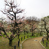 Ume Lined Pathway.<br /> In the grounds of Osaka Castle.