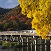 Autumn in Arashiyama.