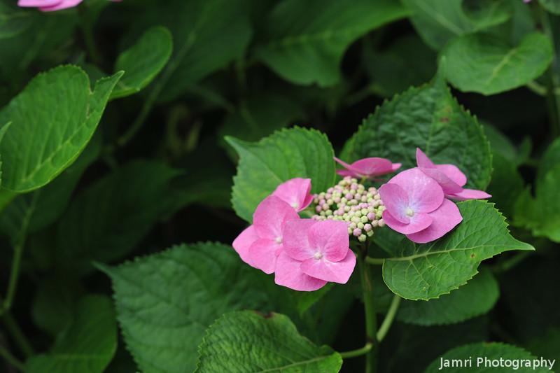 Pink Petals.