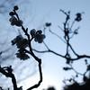 Plum Blossom Silhouette