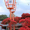 Azalea and Lanterns.<br /> At Nagaoka Tenmangu Shrine, in Nagaokakyo.