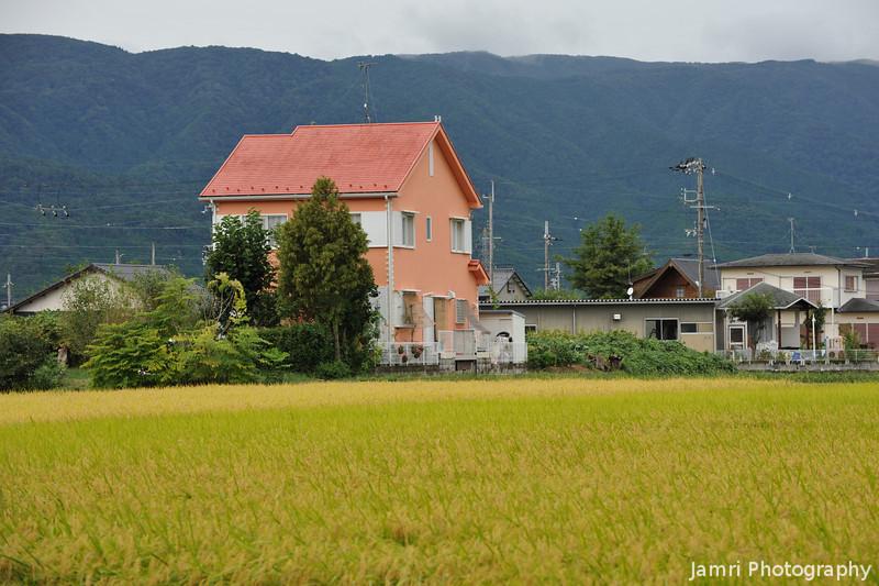 An Orange House and Golden Field.<br /> In Omi-Imazu, Shiga Prefecture, Japan.