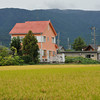 An Orange House and Golden Field.<br /> In Omi-Imazu, Shiga Prefecture, Japan.