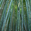 Into the Bamboo Forest<br /> Bamboo is one of Nagaokakyo most famous natural products.