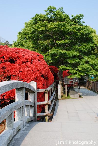 Along the path.<br /> Towards the azaleas.