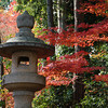 A Lantern in the Maple Forest.<br /> Just inside the entrance of Komyo-ji (a Buddhist Temple) in Nagaokakyo.