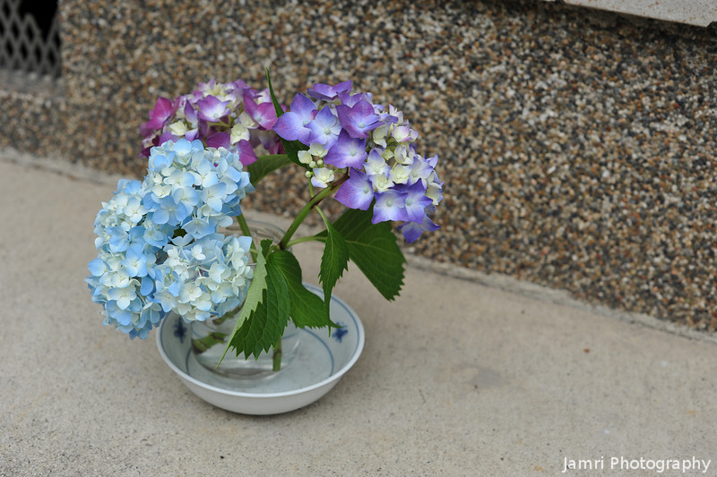A wider shot.<br /> Of the hydrangeas out the front of our house.