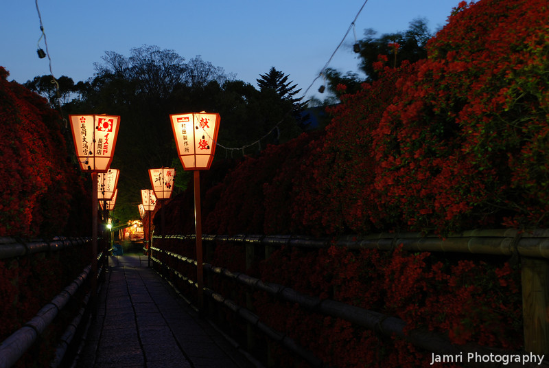 Azalea Light Up.<br /> At Nagaoka Tenmangu Shrine, in Nagaokakyo.