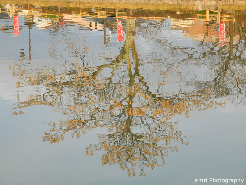 Reflections of a Berry Tree.
