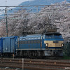 Blue Train and Sakura.