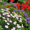 Flower Garden.<br /> Hydrangeas are not the only flowers in bloom at this time of the year.