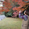 Ritsuko capturing the maple colour.