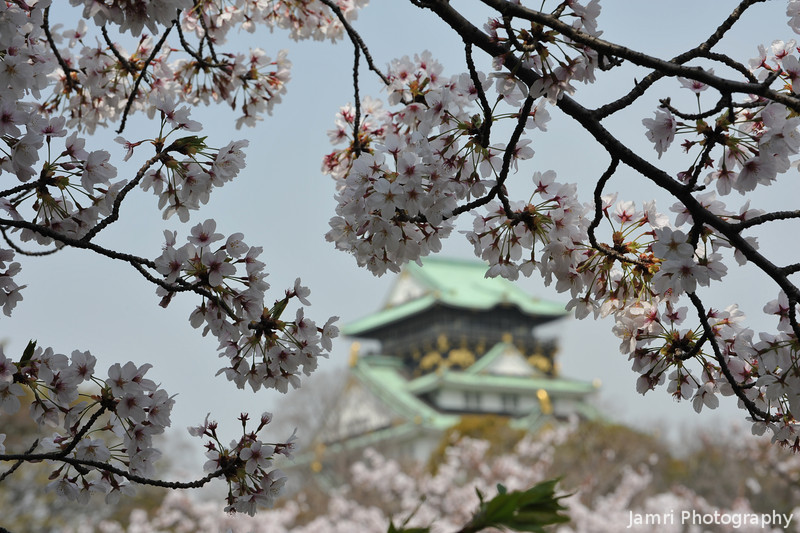 Framed by Sakura.<br /> Osaka Castle.