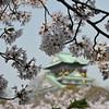 Framed by Sakura.<br /> Osaka Castle.