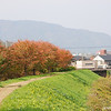 The path by the River<br /> Sakura (Cherry Blossom) Trees, displaying autumn colour along the path by the Inugawa (Dog River).