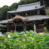 The Main Temple behind the Lotuses.<br /> Mimuroto-ji (a Buddhist Temple) near Uji, Kyoto.