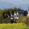 Nanohana, Houses, Bamboo, Sky.
