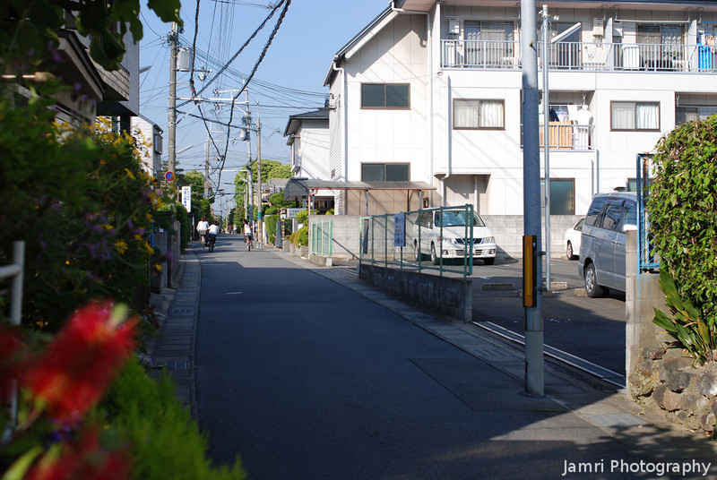 A View of the Street with the Bottle Brush.<br /> A residential neighbourhood in Nagaokakyo, Japan is an unlikely place to find an Australian Native plant.
