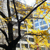 Osaka Abstract.<br /> When for a quick trip into Osaka for some Christmas Shopping, took a rather rushed sequence of three shots of this tree, this shot is a little blurry, but it captured the feeling better than the other two shots.