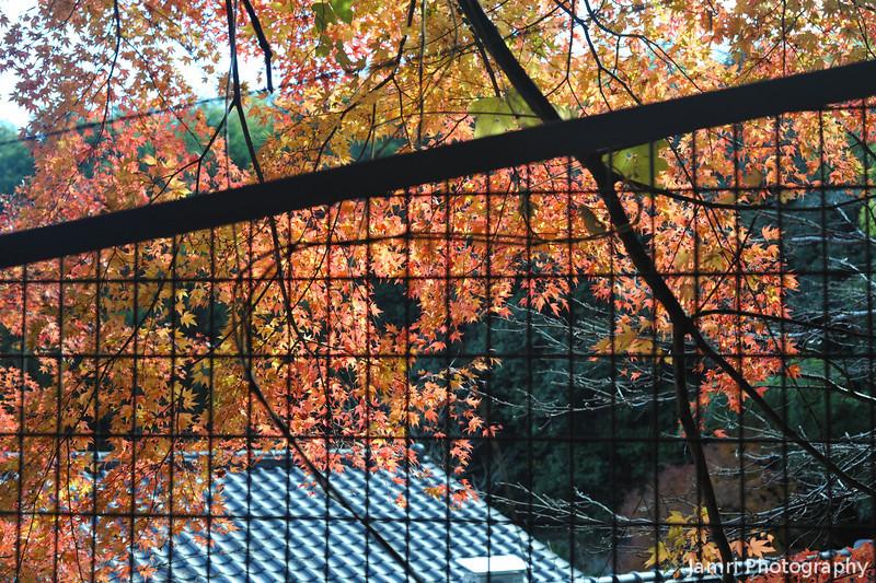 Colour through the fence.<br /> At the Torokko Arashiyama Train Station.