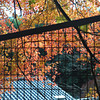 Colour through the fence.<br /> At the Torokko Arashiyama Train Station.