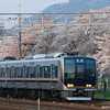 Commuter Train and Sakura.