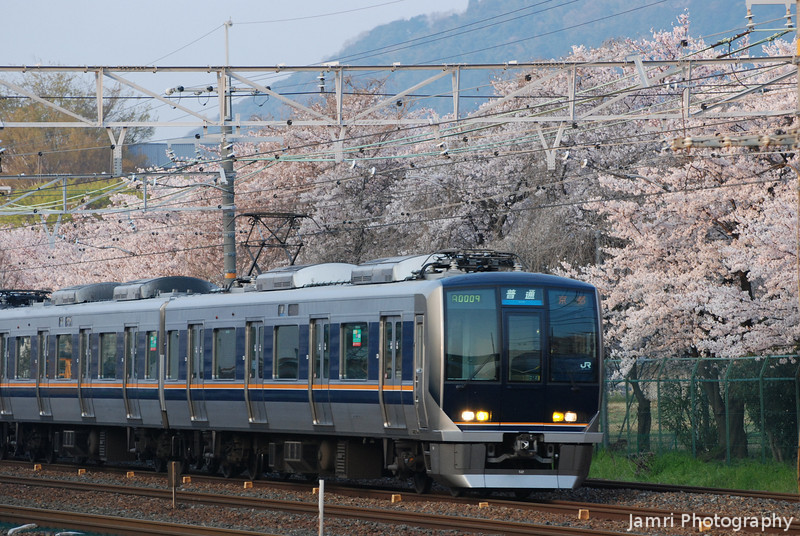 Commuter Train and Sakura.