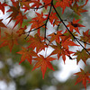 Heading  towards Red.<br /> More Autumn foliage at Kiyomizu-dera (Kiyomizu temple), Higashiyama, Kyoto.