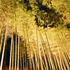 Looking up at the Golden Lit Bamboo.<br /> During the Arashiyama Hanatouro 2010.<br /> Note: Film Shot, Nikon F80 + 24f/2.8mm + Fujicolor PRO400