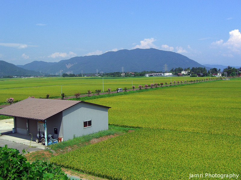 The Countryside of Makino.<br /> From Omi-Nakasho Station, a row of Sarusuberi trees lines the road.